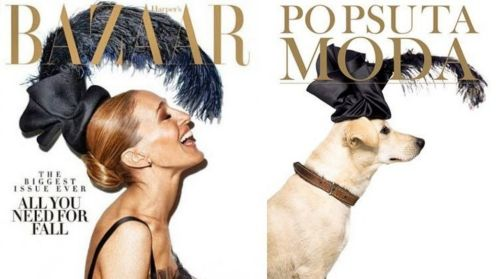 Animal rescue organisation Po Psu Ta Moda set out to recreate the most iconic fashion covers with shelter dogs in need ...